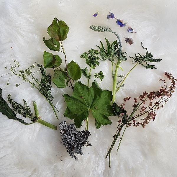 Alle plantene samlet, om enn litt tørre etter reisen