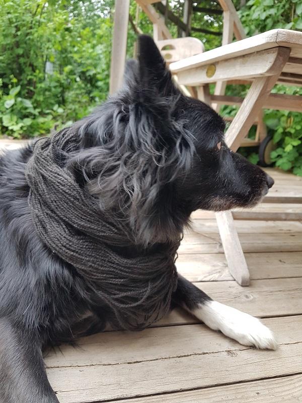Svart hund - svart garn